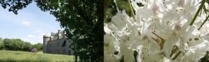 arbres_monde_1f